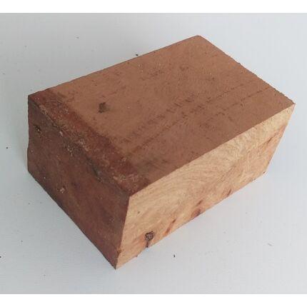 Canistel fa gyökér 50x70x100 mm 1. sz