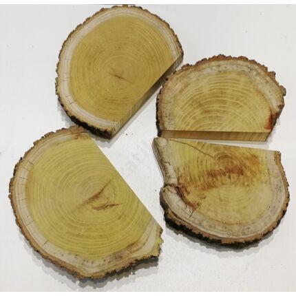Eperfa rönk fa szelet   fél korong 30 mm vastag csiszolt felülettel