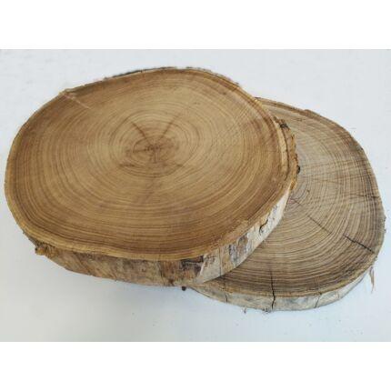 Japán akácfa rönk fa szelet  átm. 400-500 mm 50-80 mm vastag kb. 0,15 m2 fa korong 2. sz.