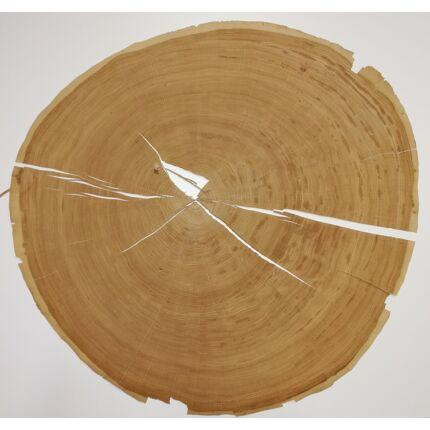 Furnérlemez bütü tölgyfa 0,9 mm  átm. 800 mm  1 lap / 0,5 m2 / csomag 1. sz.