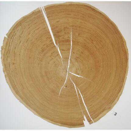 Furnérlemez bütü tölgyfa 0,9 mm  átm. 800 mm  1 lap / 0,5 m2 / csomag 3. sz.