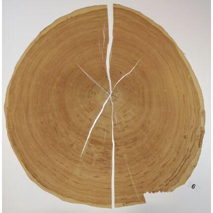 Furnérlemez bütü tölgyfa 0,9 mm  átm. 800 mm  1 lap / 0,5 m2 / csomag 6. sz.