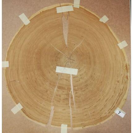 Furnérlemez bütü tölgyfa 0,9 mm  átm. 800 mm  1 lap / 0,5 m2 / csomag 7. sz.