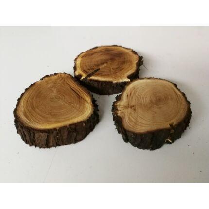 Tiszafa rönk fa szelet  átm. 100-150 mm 30-40 mm vastag kb. 0,011 m2 fa korong T1 sz