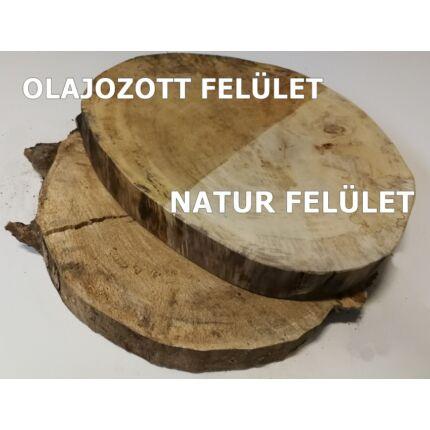 Nyárfa rönk fa szelet  átm.  500-600 mm 40-70 mm vastag fa korong 17. sz.