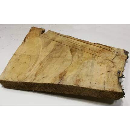 Nyárfa rönk fa szelet  500x600 mm 50 mm vastag 9. sz.