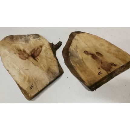 Nyárfa rönk fa szelet  átm.  250-350 mm 30-50 mm vastag 15. sz.
