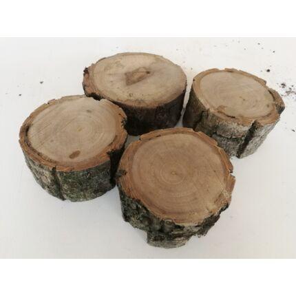 Diófa rönk fa szelet  átm.  50-100 mm 30-50 mm vastag fa korong 6. sz